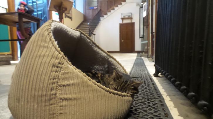 Jones, le chat de l'église de Covent Garden